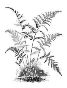 Engraving Illustration, Forest Illustration, Plant Illustration, Botanical Illustration, White Ornaments, Plant Art, Ink Pen Drawings, Stencil Painting, Botanical Art