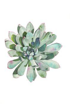 Succulent print of watercolour painting S116 - A3 size largest print- botanical art