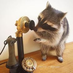 """Hello? Anyone there?"" 