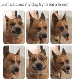 Mood Enhancing Pics and Memes - - Funny, weird and WTF images that will make your day better. Funny Animal Memes, Dog Memes, Funny Animal Pictures, Cute Funny Animals, Funny Cute, Funny Dogs, Hilarious, Funny Photos, Funny Memes