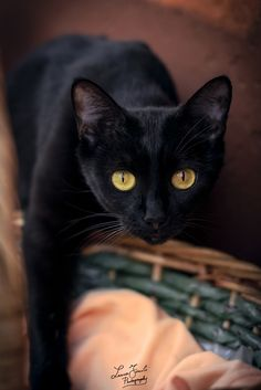 Mini panther by Luca Foscili on 500px