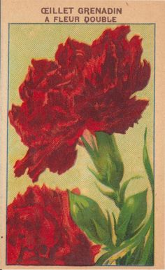 French Seed Pack Label for Oeillet Grenadin A Fleur Double