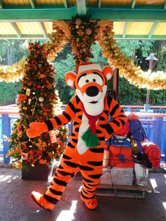 Tigger: met him at Disney World while on tour with the Duke Chorale circa 1981 Walt Disney, Disney Cast, Disney Magic, Disney Parks, Disney Dream, Disney Love, Disney Theme, Disney World Christmas, Disneyland Christmas