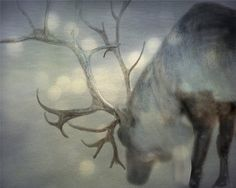 Beautiful - Christmas Photo of Reindeer / Deer - If on a Winter's NIght - Snow and Reindeer - Christmas photography - 8x10