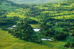 ドワーフの森 芳ヶ平湿原