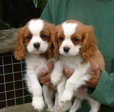 #puppies #twins