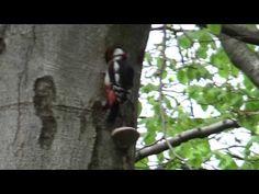 Spec od Fortyfikacji drzewnych w Lesie Wolskim.