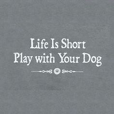 Life is short play with your dog.