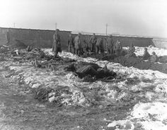 Battle of the Bulge - German prisoners of war dig graves for members of the 101st Airborne Division who were killed defending Bastogne against the Germans.     Signal Corps Photo #ETO-HQ-45-91 (Tec 5 Krochka).