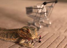 Conoce Pringle, el dragón barbudo más querido de la red