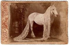 The owner of this horse showered a lot of love and attention on him to look this well groomed. It is a postcard that came from York, PA~USA  (BY the Sword's Bro.)