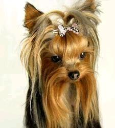 Pet Jewelry- Designer Dog Dress