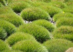 Billedresultat for grasses Planting Grass, Planting Flowers, Tropical Garden, Tropical Plants, Landscaping Plants, Garden Plants, Modern Planting, Little Gardens, Garden Edging