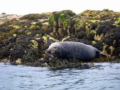Dalkey Island from Killiney Beach - sea kayaking
