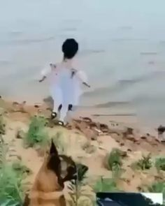 Just another dog protecting another toddler at the seaside. Just another dog protecting another toddler at the Funny Animal Memes, Funny Animal Videos, Cute Funny Animals, Cute Baby Animals, Funny Dogs, Baby Puppies, Cute Puppies, Cute Dogs, Chien Golden Retriever