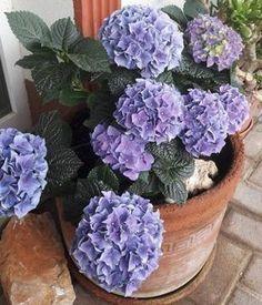 Organic Gardening Tips Planting Vegetables, Vegetable Garden, Organic Gardening Magazine, Rogers Gardens, Garden Privacy, Garden Basket, Australian Garden, Garden Stones, Garden Gifts
