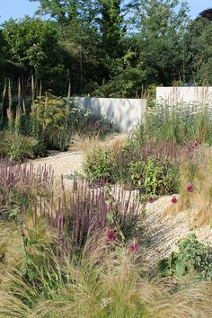"I love how everything is all packed together and ""fluffy"" A Hertfordshire Garden by Wilson McWilliam Studio Gravel Garden, Garden Landscaping, Dutch Gardens, Prairie Garden, Garden Borders, Natural Garden, Ornamental Grasses, Dream Garden, Garden Planning"