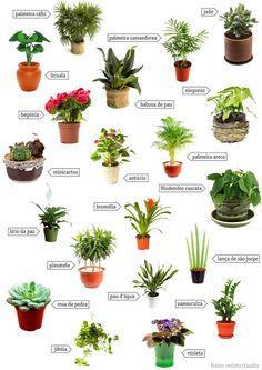 espécies de plantas para jardim