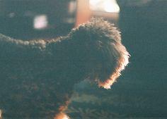 My puppy, Manchee!