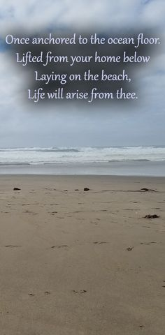 Once anchored to the ocean floor. Lifted from your home below Laying on the beach, Life will arise from thee.