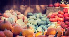 Gem-Squash: Leckeres Kürbis-Rezept aus Südafrika Sit Ups, Anti Stress, Pumpkin, Squash, Vegetables, Instagram Posts, Dips, Food, Best Music