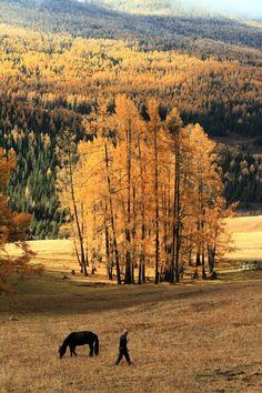 Kanas Lake looks the most beautiful in autumn.  Kanas Lake is located in Burerjin County of Aletai area in Xinjiang Uygur Autonomous Region