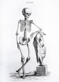 Osteographia (1733) by William Cheselden Probably the finest illustrations of the musculoskeletal system produced in the eighteenth century were by William Cheselden and by Siegfried Albinus. This is a representation of the skeletal anatomy