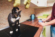 7 Things in Your Kitchen That Are Grossing Out Potential Buyers Crazy Cat Lady, Crazy Cats, Calming Cat, Scared Cat, Guinea Pig Toys, Curious Cat, Best Dog Breeds, Cool Cats, Pet Dogs