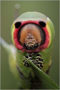 30 Incredible Insect Photographs By Igor Siwanowicz Part-II   The Wondrous Design Magazine