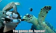 laughing turtle   Uploaded to Pinterest