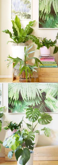 Check out our gorgeous indoor garden with 18 best indoor plants! Plus 5 essential tips on how to grow healthy house plants! Make your home more beautiful with these showy foliage and flowering plants that thrive in low light conditions, and are so easy to grow! #houseplantsindoor