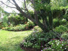 30 Best Under Oak Trees Images Landscaping Vegetable Garden