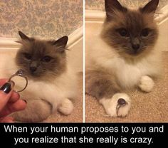 When your human proposed to you