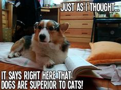 Just as I thought,  it says right here that dogs are superior to cats