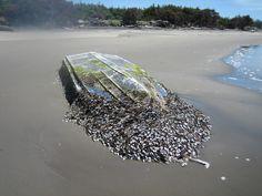 Llega a una playa del Estado de Washington un barco arrastrado por el tsunami de Japón - Boat washed ashore may be from Japanese tsunami