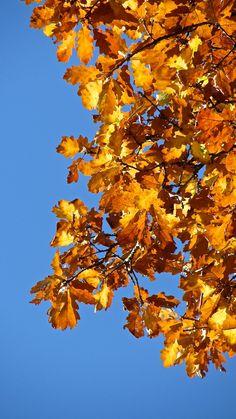 Leaves. Sky. Leaves, Sky, Heaven, Heavens