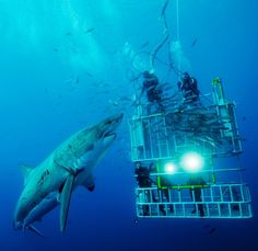 This is definitely on my bucket list - sans the cage.