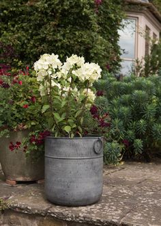 Buy Metal planter: Delivery by Waitrose Garden in association with Crocus