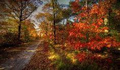 Картинки по запросу фото осень природа