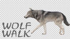 animal, dog, halloween, howl, jaw, monster, moon, nigth, scary, walk, wild life, wolf