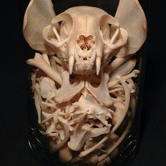 Cat skull mask without ears sz S Tiger Skull, Cat Skull, Skull Mask, Animal Skeletons, Animal Skulls, Skeleton Bones, Skull And Bones, Skull Reference, Animal Bones