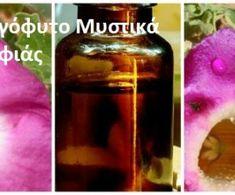 Ενισχυμένη Μαύρη Πεύκη. Ισχυρότερη σύσφιξη και ανόρθωση! | Μυστικά ομορφιάς | mystikaomorfias.gr Whiskey Bottle, Herbs, Drinks, Health, Food, Sink Tops, Drinking, Beverages, Health Care