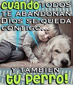 Cuando todos te abandonan Dios se queda y tu perro también #animales #perros - Tarjetitas