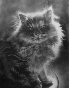 Incredibly Realistic Pencil Drawings by Paul Lung