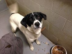 URGENT- KASEY IS IN A GASSING SHELTER IN BECKLEY WEST VIRGINIA. PLEASE EMAIL NICOLE AT SHELTER RCPETS13@YAHOO.COM FOR DOGGY DETAILS AND APPLICATION.TRANSPORT IS AVAILABLE FOR ALL APPROVED OUT OF STATE ADOPTIONS. THIS SHELTER WILL EUTHANIZE FOR...
