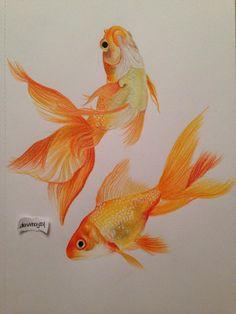 Goldfish, Prismacolor Premier Colored Pencils.  #goldfish #drawing #realizm #art