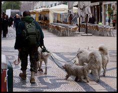 Dogman-Lissabon by Nells Photography, via Flickr
