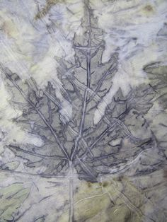 Silver Maple by apoolew2o, via Flickr  Amelia Poole
