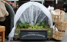 The lovely folks at @SkyNursery have some great tips about how to jump start your veggie garden during this chilly spring!