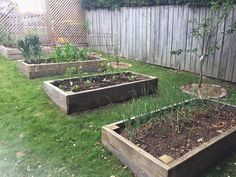Recycled garden beds - made with old fences and filled with collected materials. Zero waste.